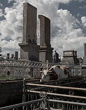 31 Laendlicher Friedhof