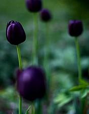 Les fleurs du malle