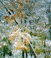 Schneeherbst 13 2012