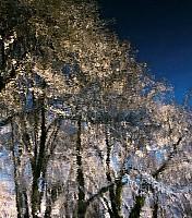 Schneeherbst 2 2012